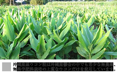 沖縄で生産された黒ウコンのみを使用